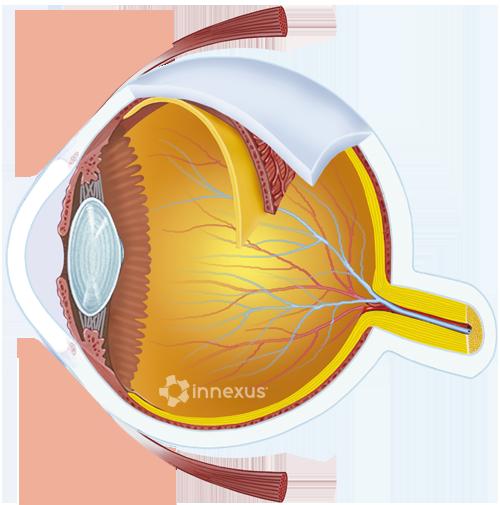 Human eyeball